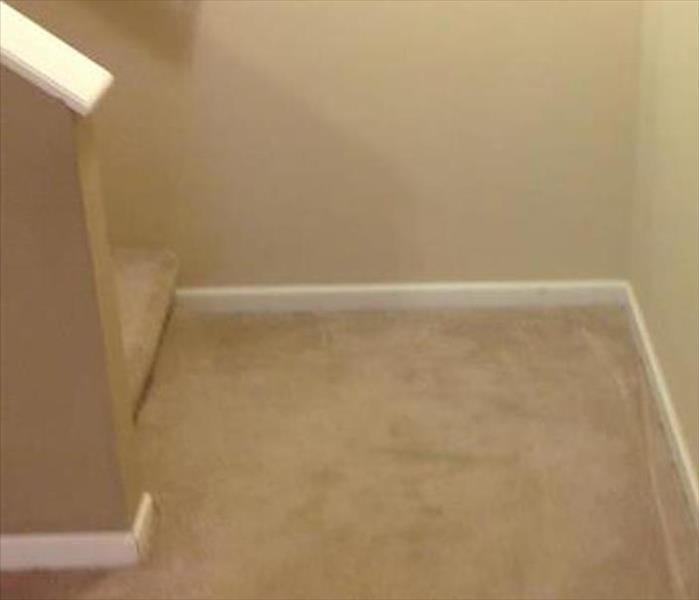 Water Damage on a Carpet--Burnsville After