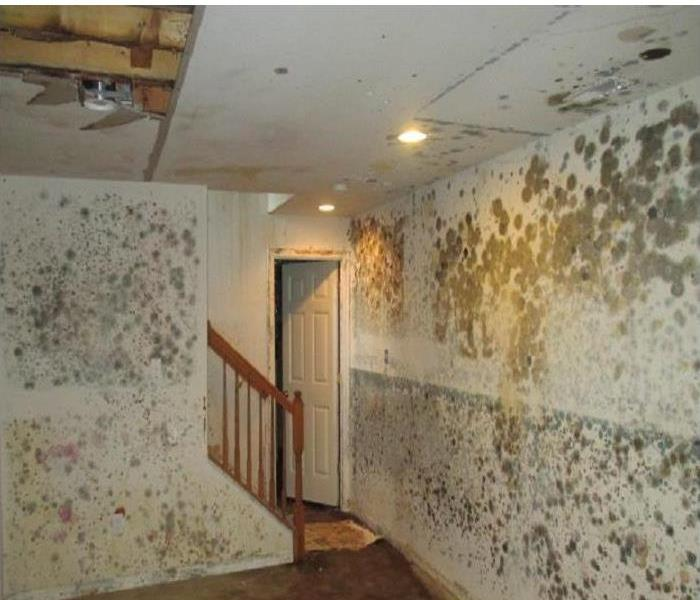 Lakeville Mold Infestation