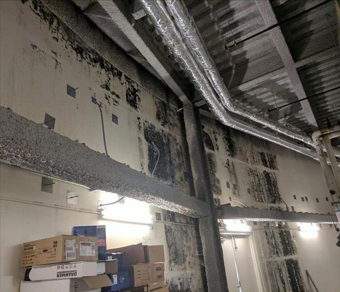 Burnsville Commercial Mold Remediation