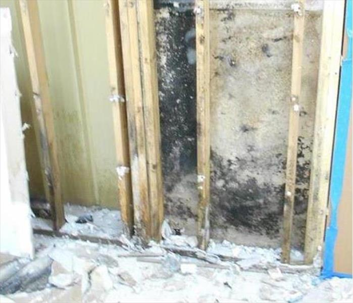 Mold Damage Is Extreme in Lakeville