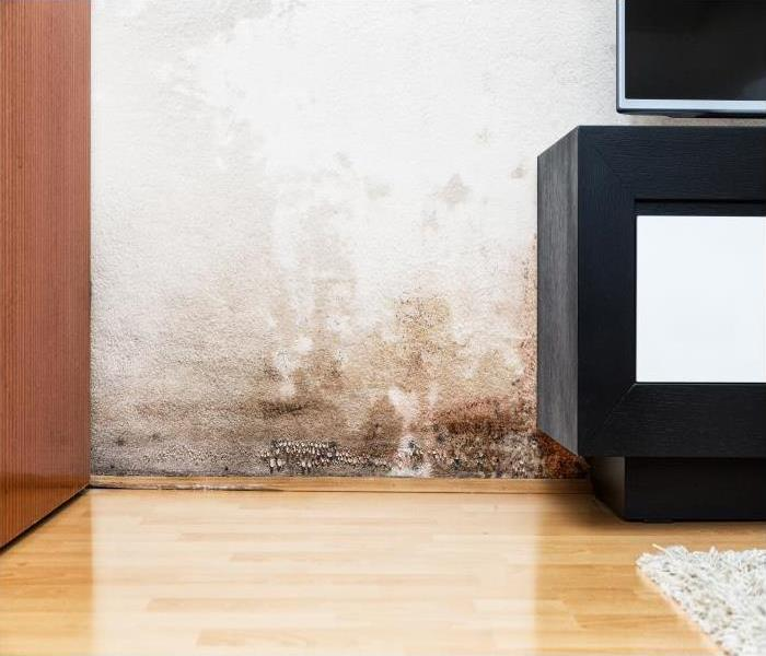 Mold Remediation Mold Damage Remediation In Farmington Does Not Cause Long-Term Disturbance To Your Daily Routine