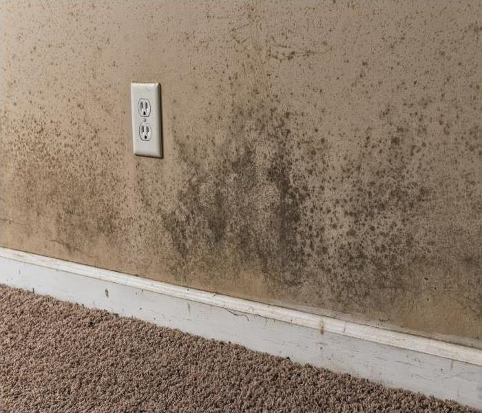 Mold Remediation Reliable Mold Damage Remediation Solutions In Lakeville
