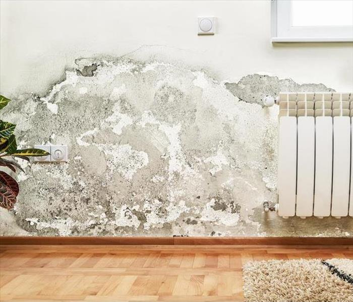 Mold Remediation A Team That Responds Quickly to Mold Damage in Your Farmington Home